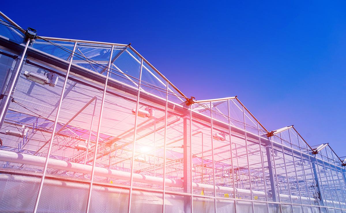 Tutti i raggi solari influenzano la crescita delle coltivazioni e la produzione
