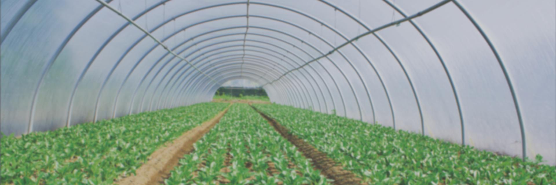 Plastic greenhouse structure