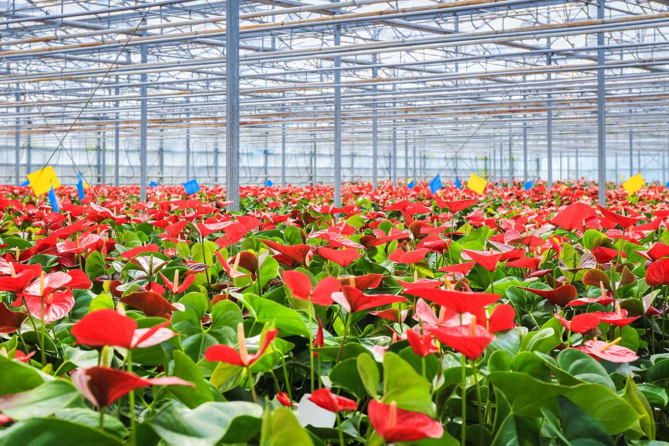 Plants benefit from coatings