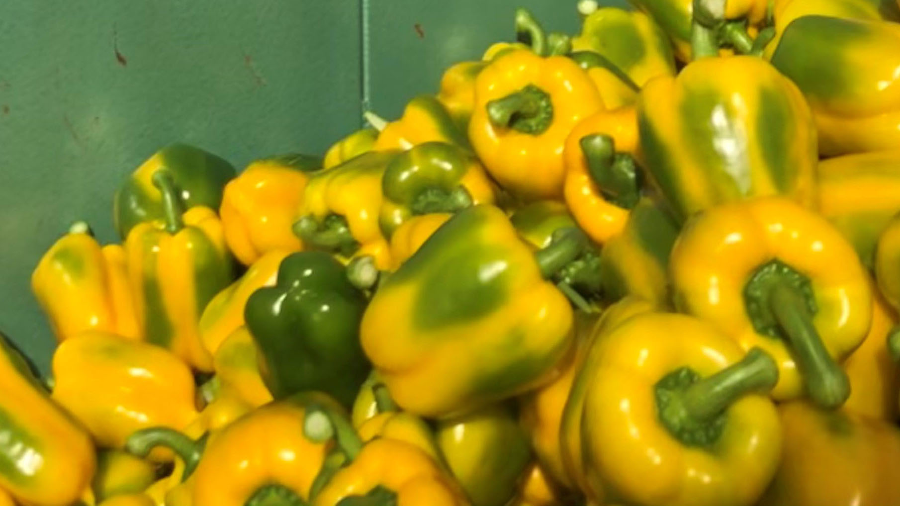 green yellow sweet peppers